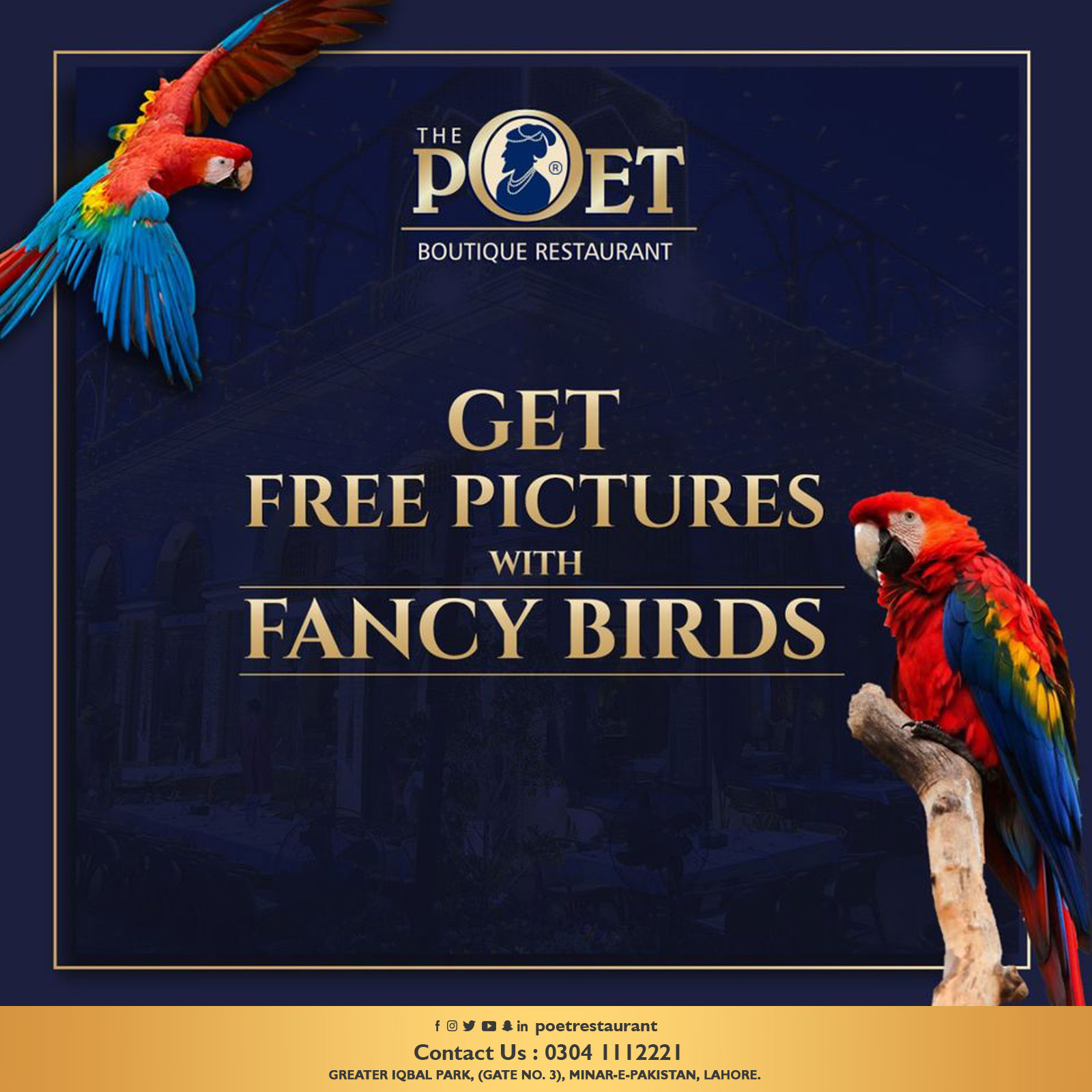 Get Free Pictures with Fancy Birds